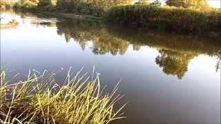 Ловля маховой удочкой на пшеницу. Делюсь опытом. Рыбалка в Самаре. Fishing rod float