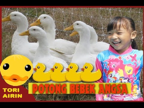 Potong Bebek Angsa - Lagu anak indonesia populer with lirik versi baru - tori airin
