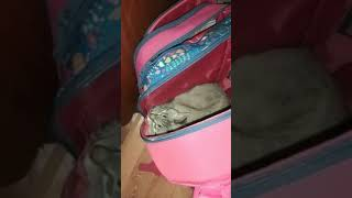 Кошка в рюкзаке)