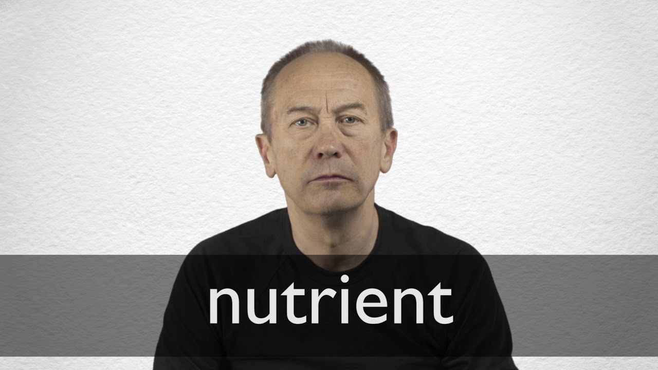 Nutrient Definition und Bedeutung  Collins Wörterbuch