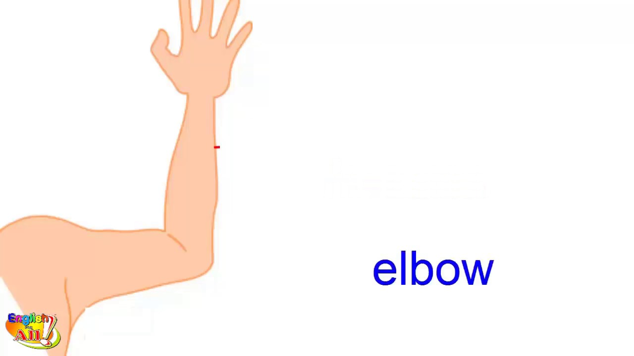 Learn English Vocabulary Hand And Arm Human Body Parts Youtube