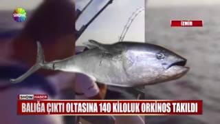 Balığa çıktı oltasına 140 kiloluk Orkinos takıldı