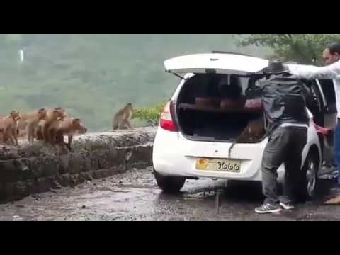 Viral Video : Stop Animal Brutality !!! Please share this video to catch these bastards
