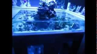 saltwater aquarium fish tank reef living bonsai island tank blue lights