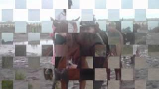 Konie Moją Pasją