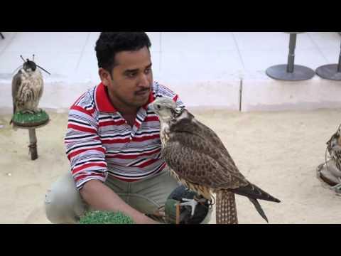 Qatar Doha Marché aux faucons / Doha Qatar Market hawks