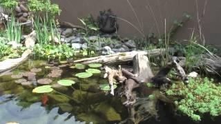 Video Turtle Pond download MP3, 3GP, MP4, WEBM, AVI, FLV Agustus 2018