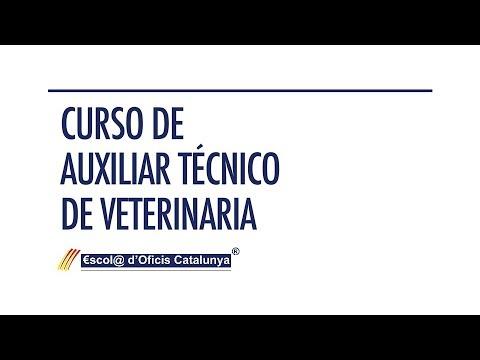Curso de Auxiliar Técnico de Veterinaria | Escola d'Oficis Catalunya