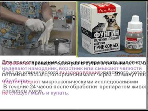 Фунгин .  Противогрибковый препарат.