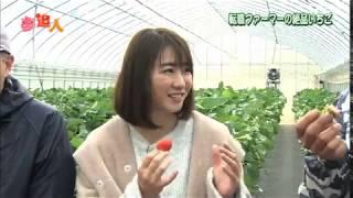 KBS京都テレビ「夢追人」滋賀編(2019年2月放送)大津の「かおりの」イチゴ・中村葵リポーター