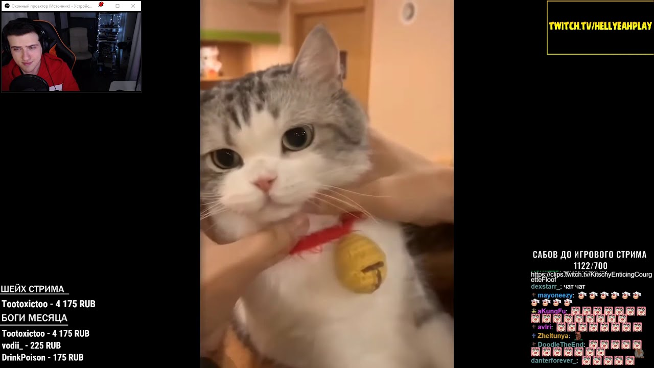 Hellyeahplay смотрит: ???? Aww - Funny and Cute Animals Compilation 2019 ???? #45 - CuteVN