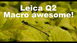 [DCI4K] The Leica Q2 lens is an awesome all-around lens that can shoot macro! Nagoya Osu Flarie
