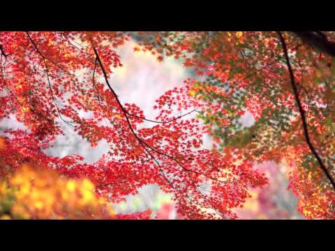 Maples Leaves - Jens Lekman