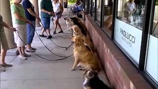 Dog Training Class: Drop-in Field Trips -- Suburban Chicago Il: Downers Grove, Illinois