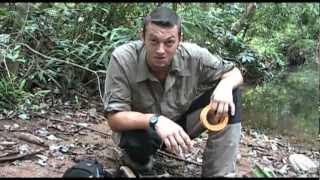 Jungle Survival Folge 7: Pflanzliche und Tierische Notnahrung im Dschungel