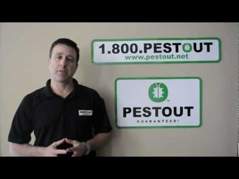 Moisture Control Part 1 (Wood destroying Organism prevention)