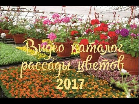 Каталог рассады цветов 2017из YouTube · Длительность: 1 мин57 с  · Просмотры: более 2.000 · отправлено: 19.02.2017 · кем отправлено: Садовый центр Дача