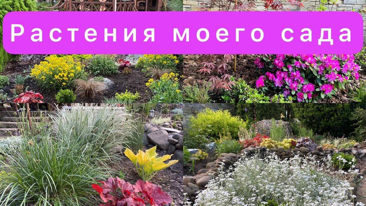 растения моего сада