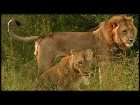 African Wildlife AIB Part 66