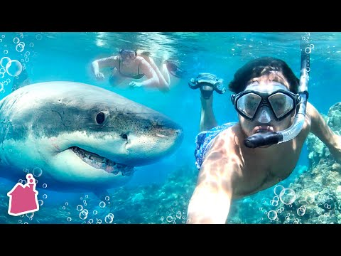 Underwater Shark Date In Hawaii!