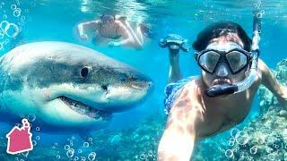 Underwater Shark Date In Hawaii!