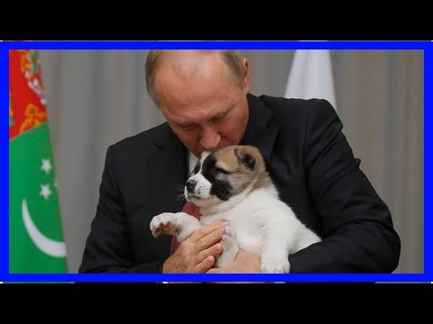 Latest News 365 - Russia trolls did not cause brexit-but their global interventions are a real dang