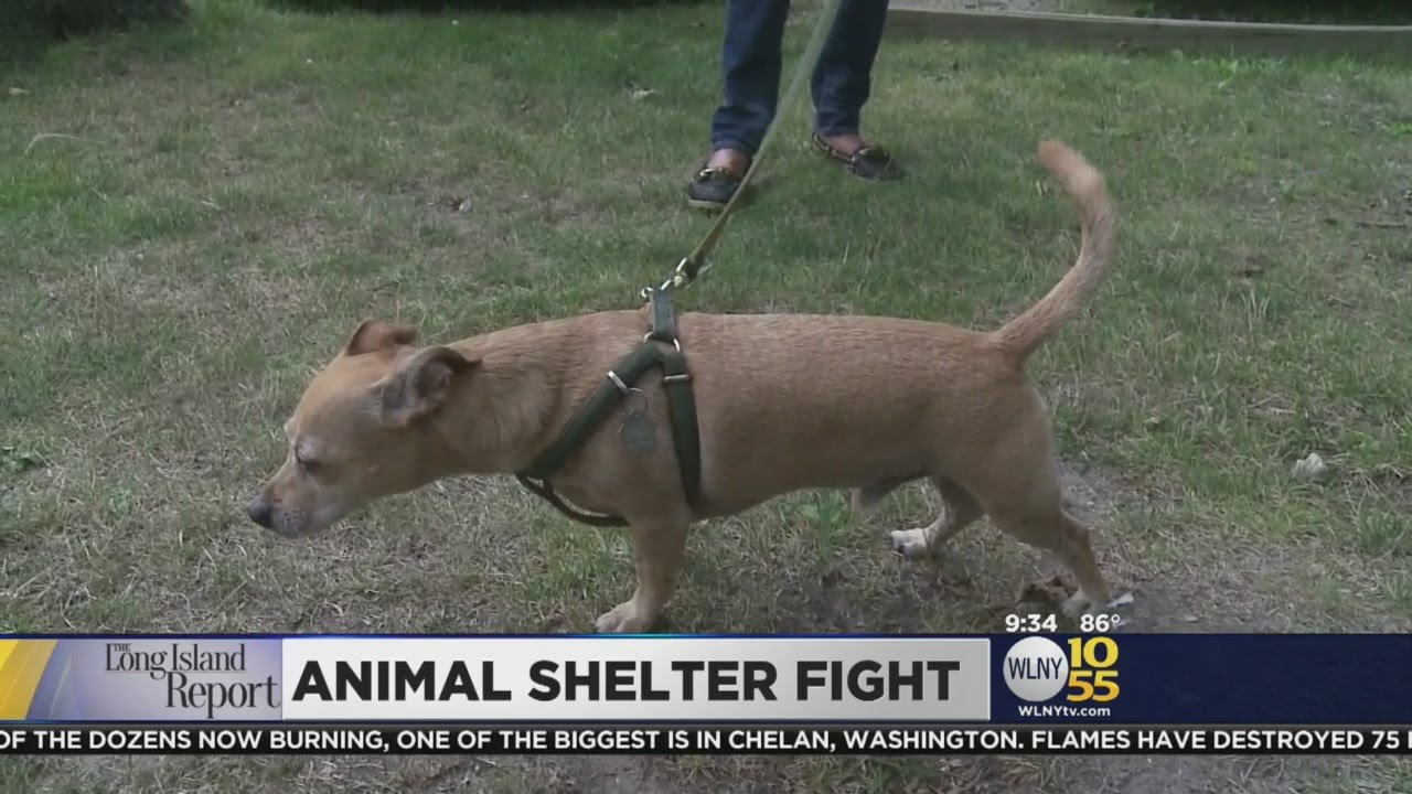 LI Animal Shelter Fight