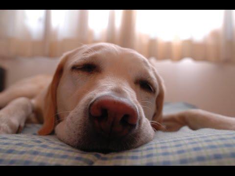 How Much Sleep Do Lifters REALLY Need?