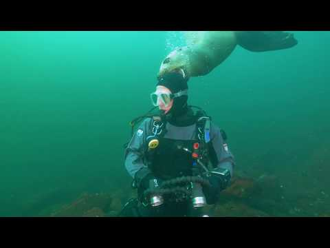 Salish Sea Wild: Steller Sea Lions, the Grizzlies of the Sea
