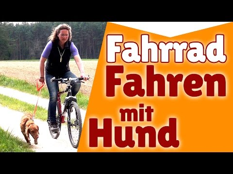 hundetransport mit auto fahrrad flugzeug hund unterwegs. Black Bedroom Furniture Sets. Home Design Ideas