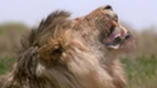 Lioness Takedown | Best of Wild
