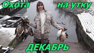 Охота на утку в декабре.Селезень в декабре.Hunting for a duck December. December drake.