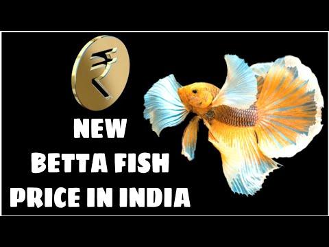 All Betta Fish Price In India | All Fighter Fish Price In India 2018 | Prathmesh Aquatics