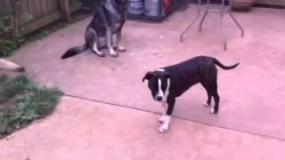 Dog Aggression Rehab Dog Training