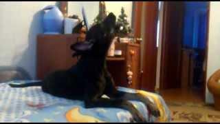 Пес воет под T-killah!!!