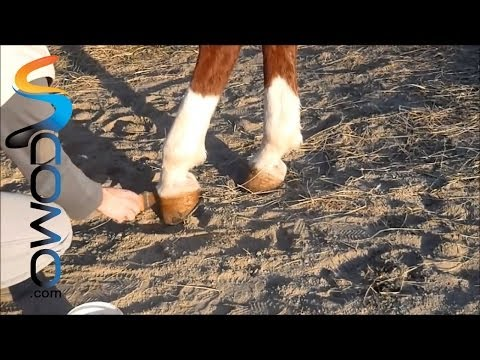cómo-engrasar-cascos-de-caballos