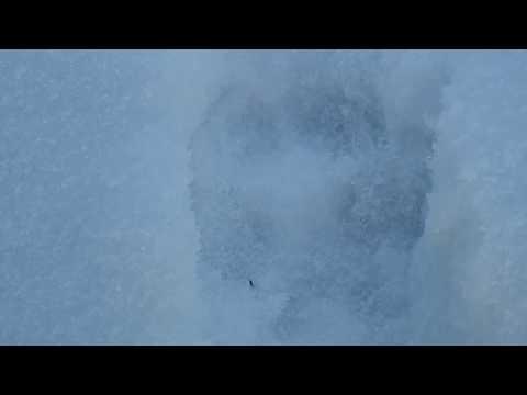 Следы лисы на снегу
