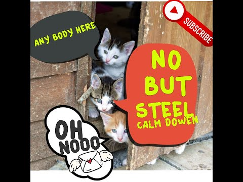 #CatReaction#FunnyCat Baby Cats - Cute and Funny Cat Videos Compilation   TRY NOT TO LAUGH 2