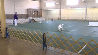 American Kennel Club Obedience And Rally Trials