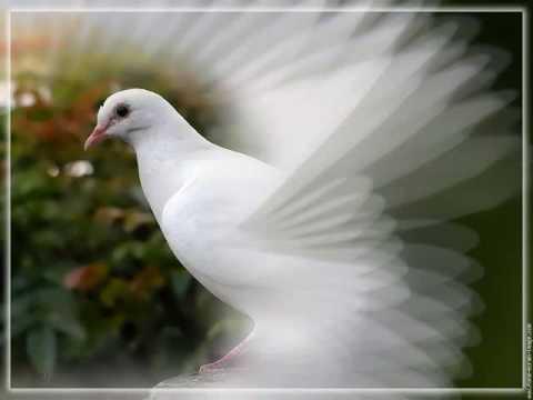 Les oiseaux du monde paix c te d 39 ivoire youtube for Les pachas du canape vert