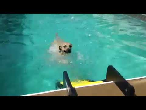 Simon with WAG Boarding Steps™ Model PM-6 Dog Pool Ladder