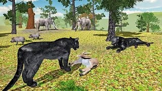 Furious Panther Simulator (by Glufun Games) Android Gameplay [HD]