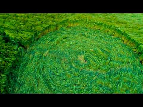 nouvel ordre mondial | CROP CIRCLE in Hackpen Hill - JUNE 9, 2018