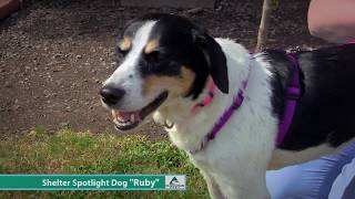 Dog of the Week: Ruby the Collie & Beagle Mix