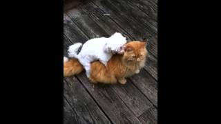 Dog and cat porno