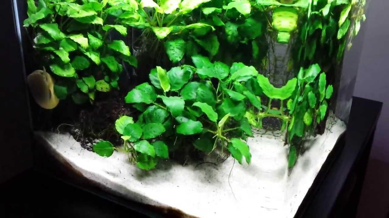 Gut Freshwater Nano Cube Aquarium (Day 583) - YouTube TJ21