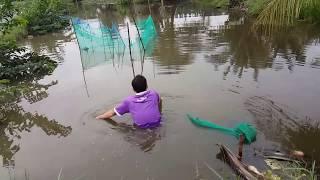 """""""Thần Chết"""" Dính Bẫy Vừa Bắt Vừa Run l Cua Đồng Tự Sát Luôn l Cobra in Trap"""