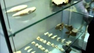 Natural History Museum of Rijeka, Croatia 01/27/2012