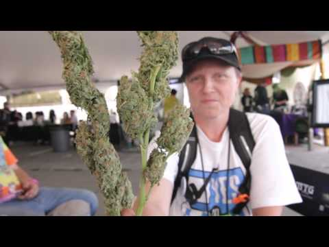 Seattle Medical Cannabis Cup Overview