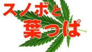 成田童夢や今井メロも言及スノボの「○麻環境」問題【虫くんch】 成田童夢 動画 30